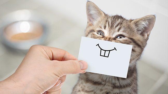 Schwierigkeiten bei der Suche nach Wohnungen, die Haustiere erlauben